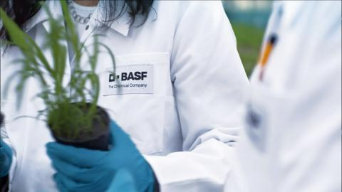 BASF Career Starter